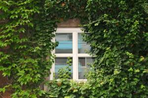 Fenster_bewachsen: sommerlicher Wärmeschutz kein Problem