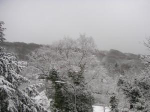 Bäume im Winterwald